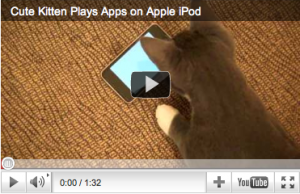 Cat ipod video