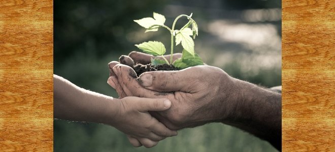 Six Ways Elders Can Save the World